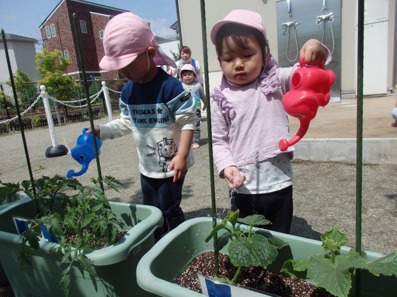 夏野菜と仲良くなろう!~野菜の苗植え活動~【コスモス大手町保育園】
