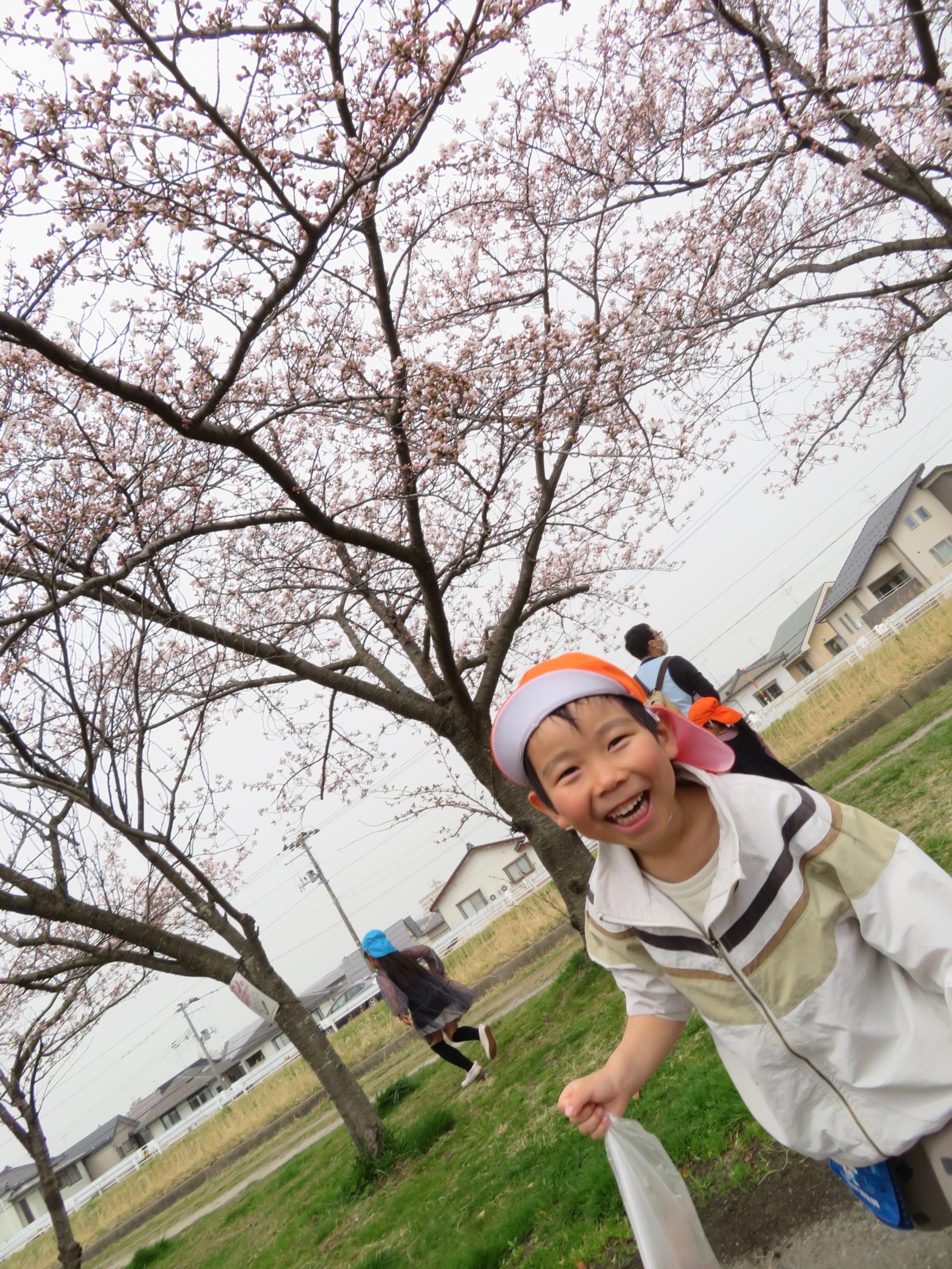 😊遊コスモス小新保育園「🌸3歳児 Cherry Blossom🌸」