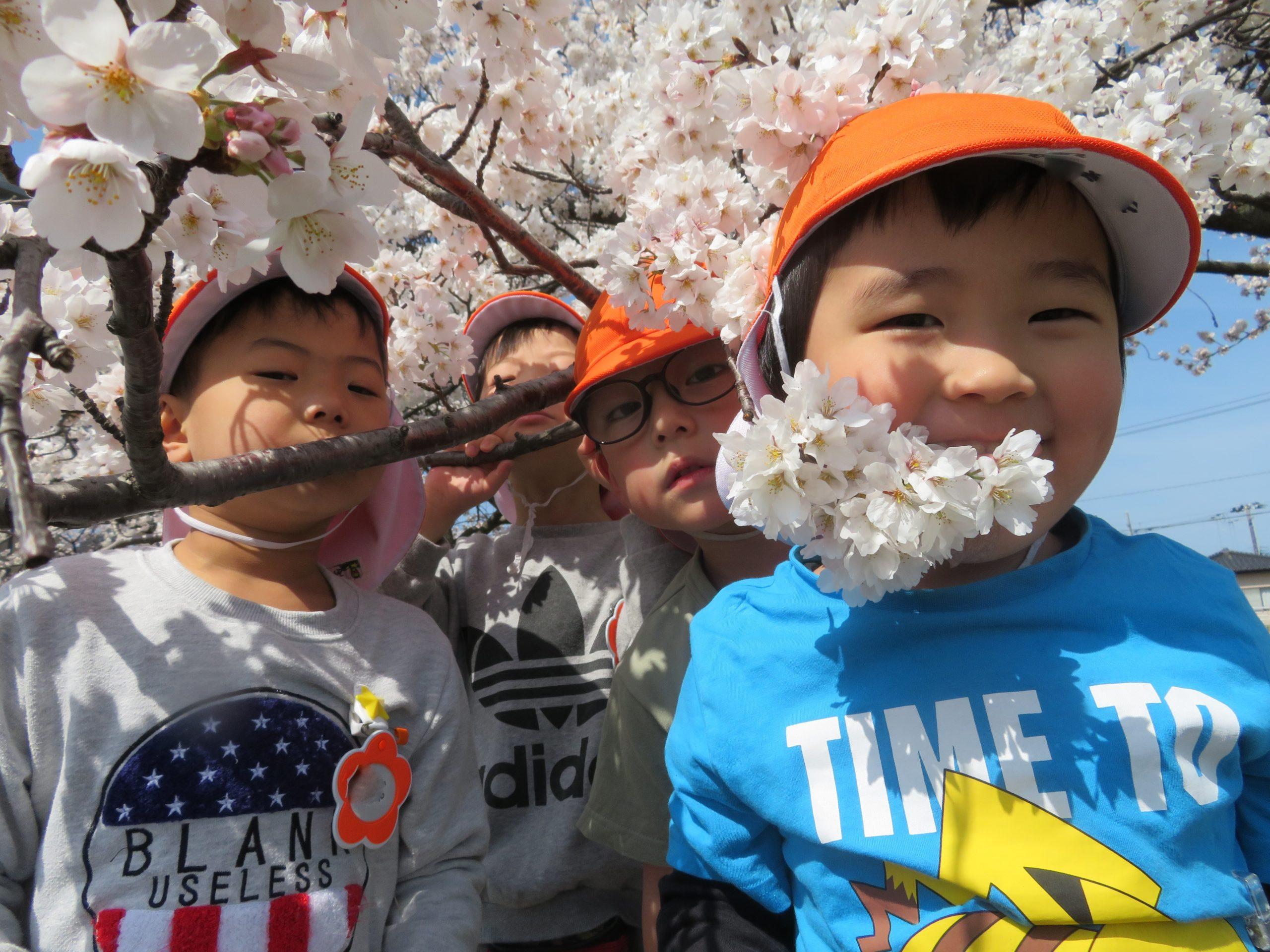 😊遊コスモス小新保育園「🌸4歳児 Cherry Blossom🌸」