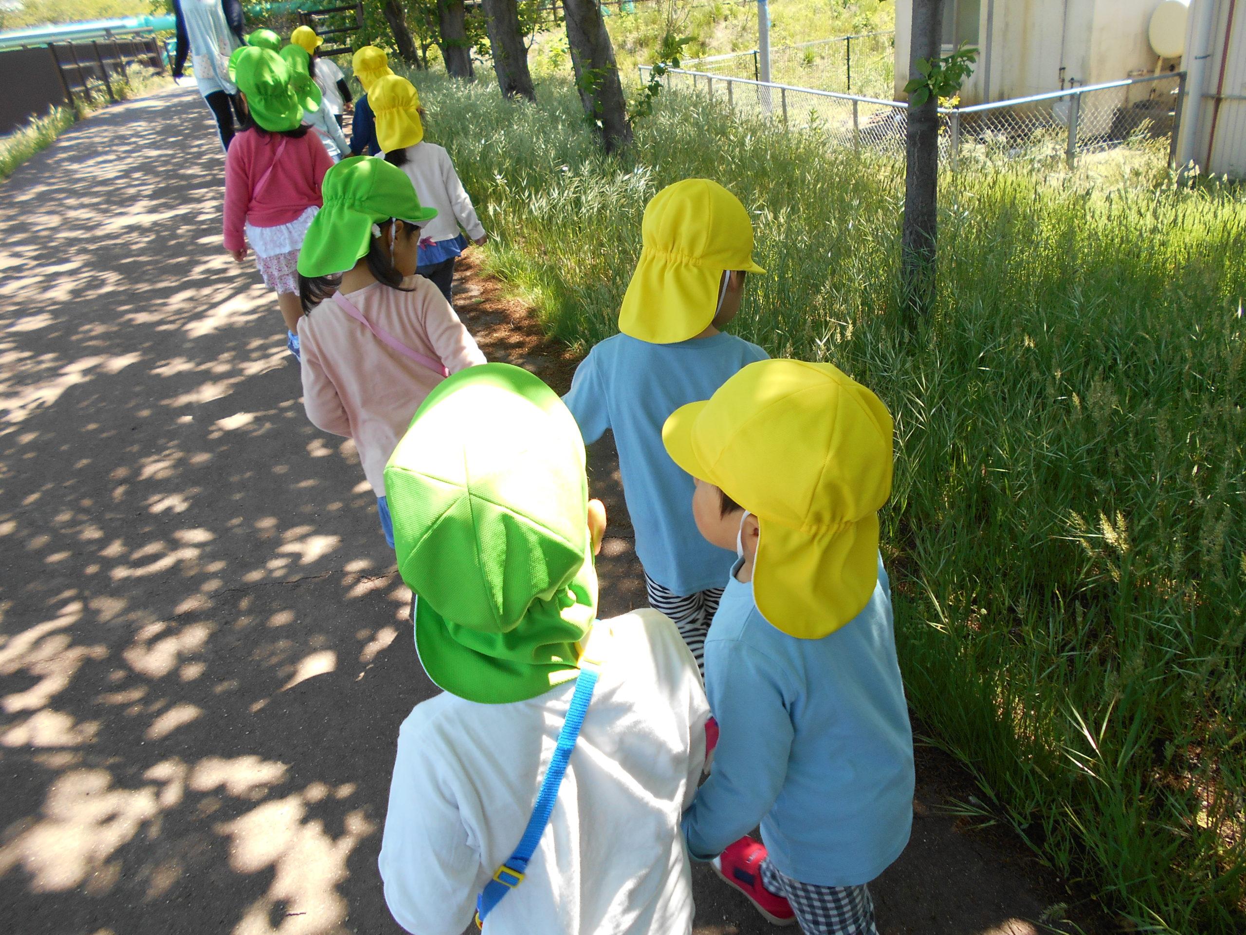 😊遊コスモス小新保育園「2歳児🌞にじ組さんとおさんぽ🌈」