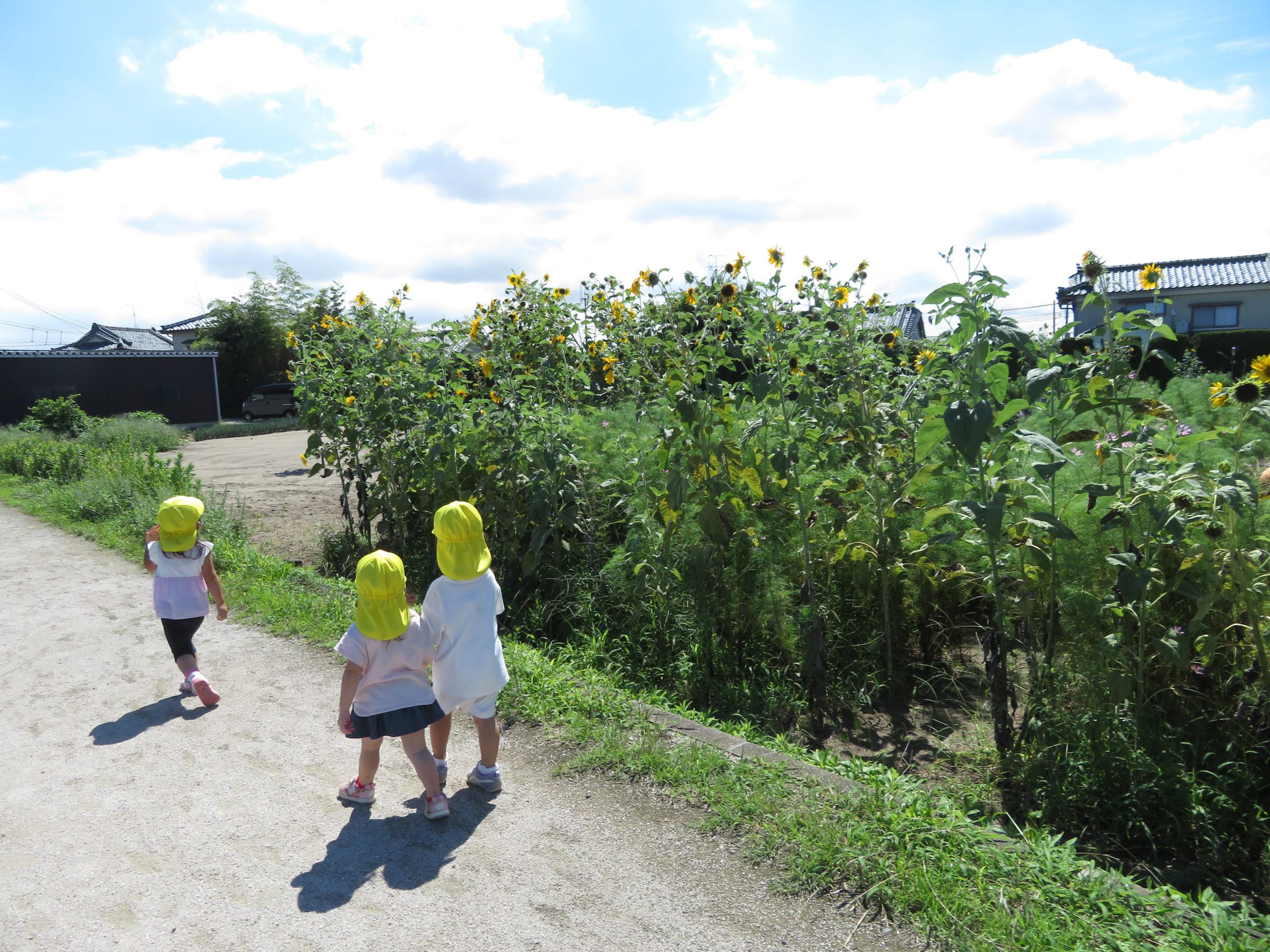 😊遊コスモス小新保育園「2歳児 おひさま散歩🌞」
